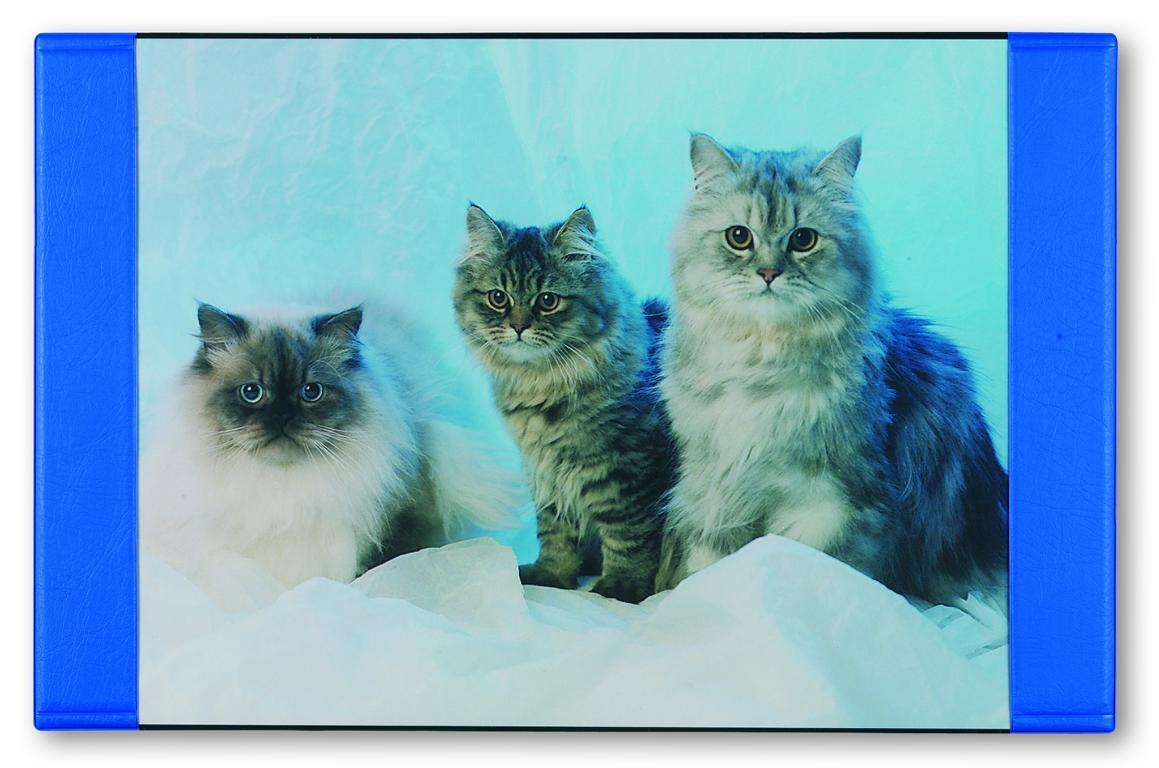 """Größe Schreibtischunterlage 68x44cm /""""Katze/"""""""
